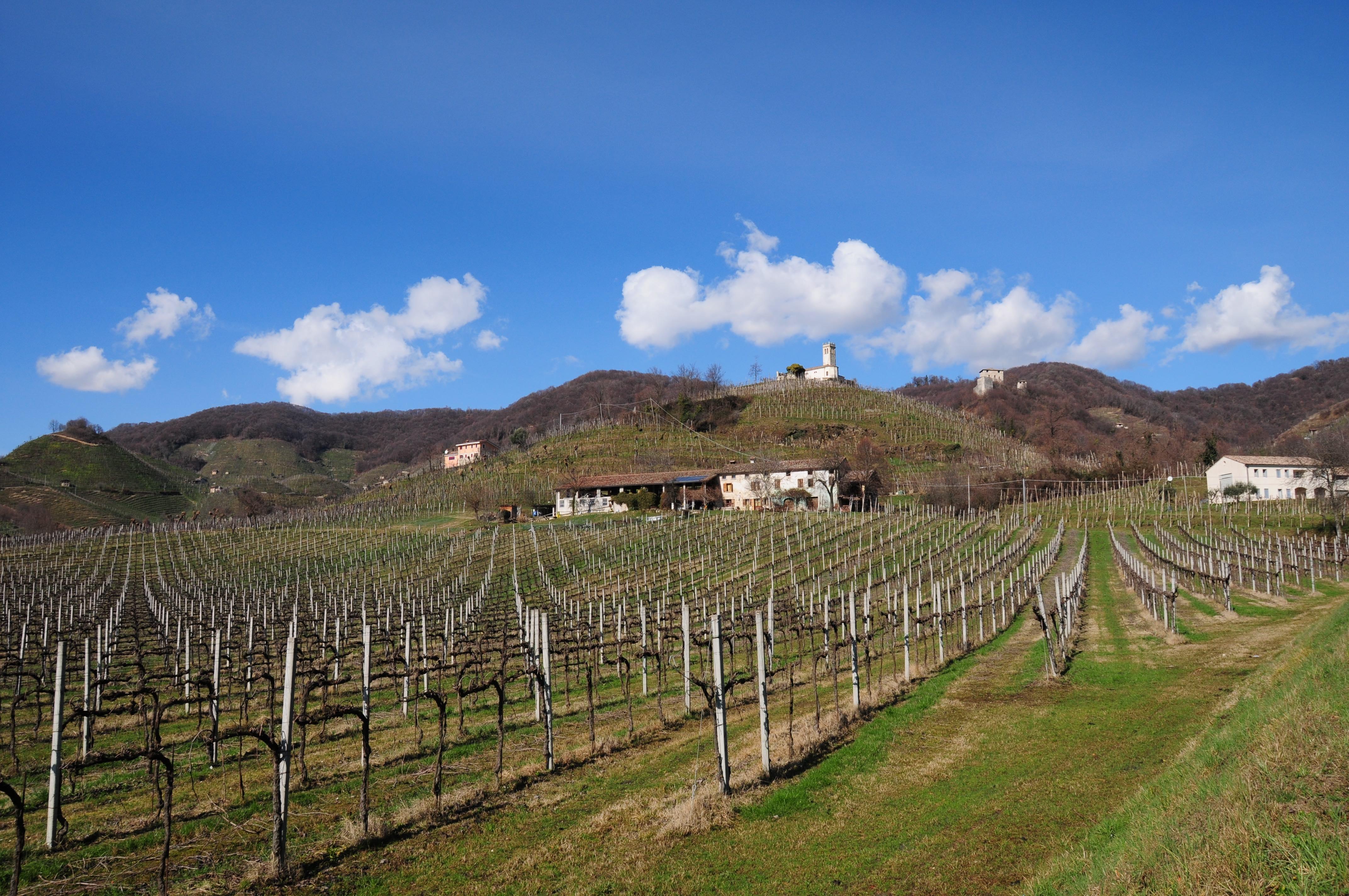 Le colline del Prosecco (ph. Germana Cabrelle)