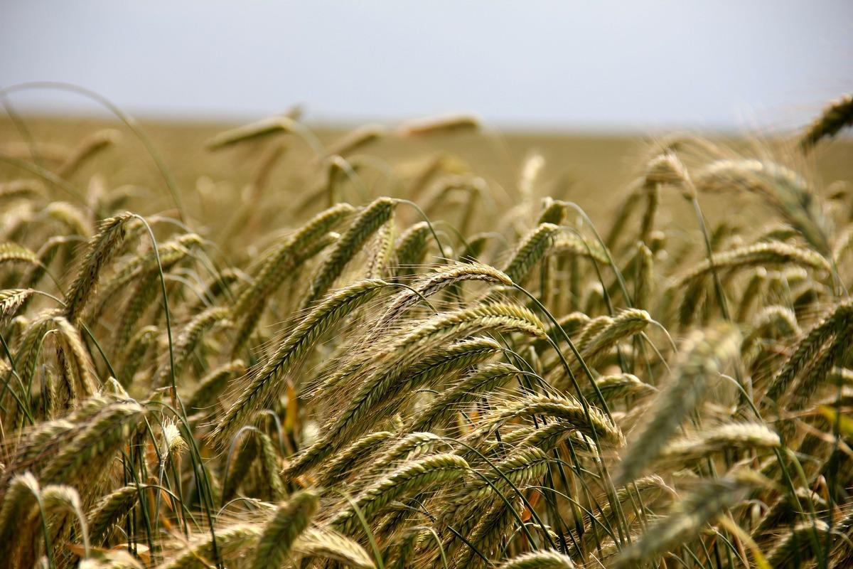 cereali gallese cosa mangiare valle del treja