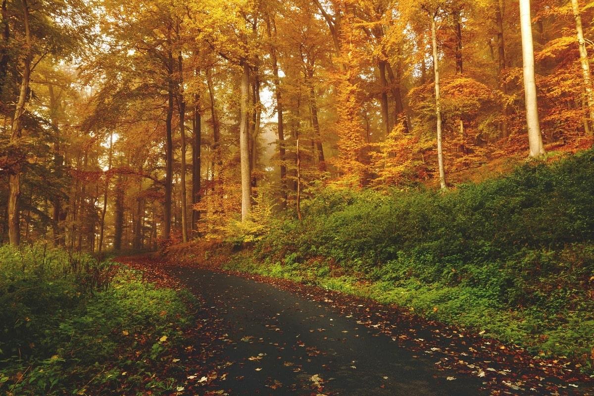 autunno monti cimini