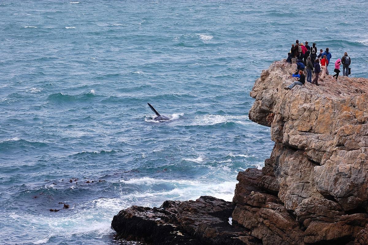 sudafrica viaggi di nozze balene
