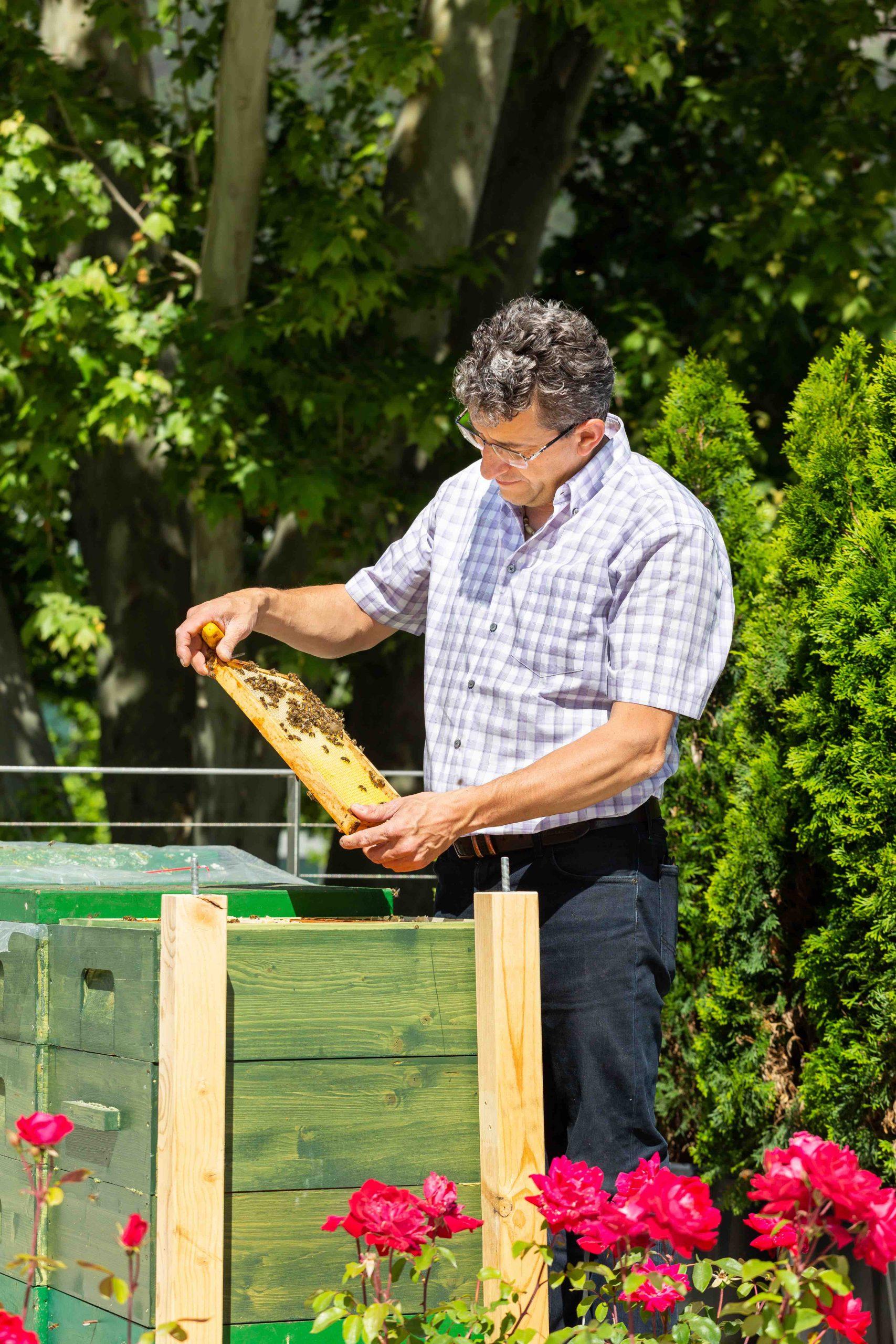 rich Larcher con le api sulla terrazza di BT